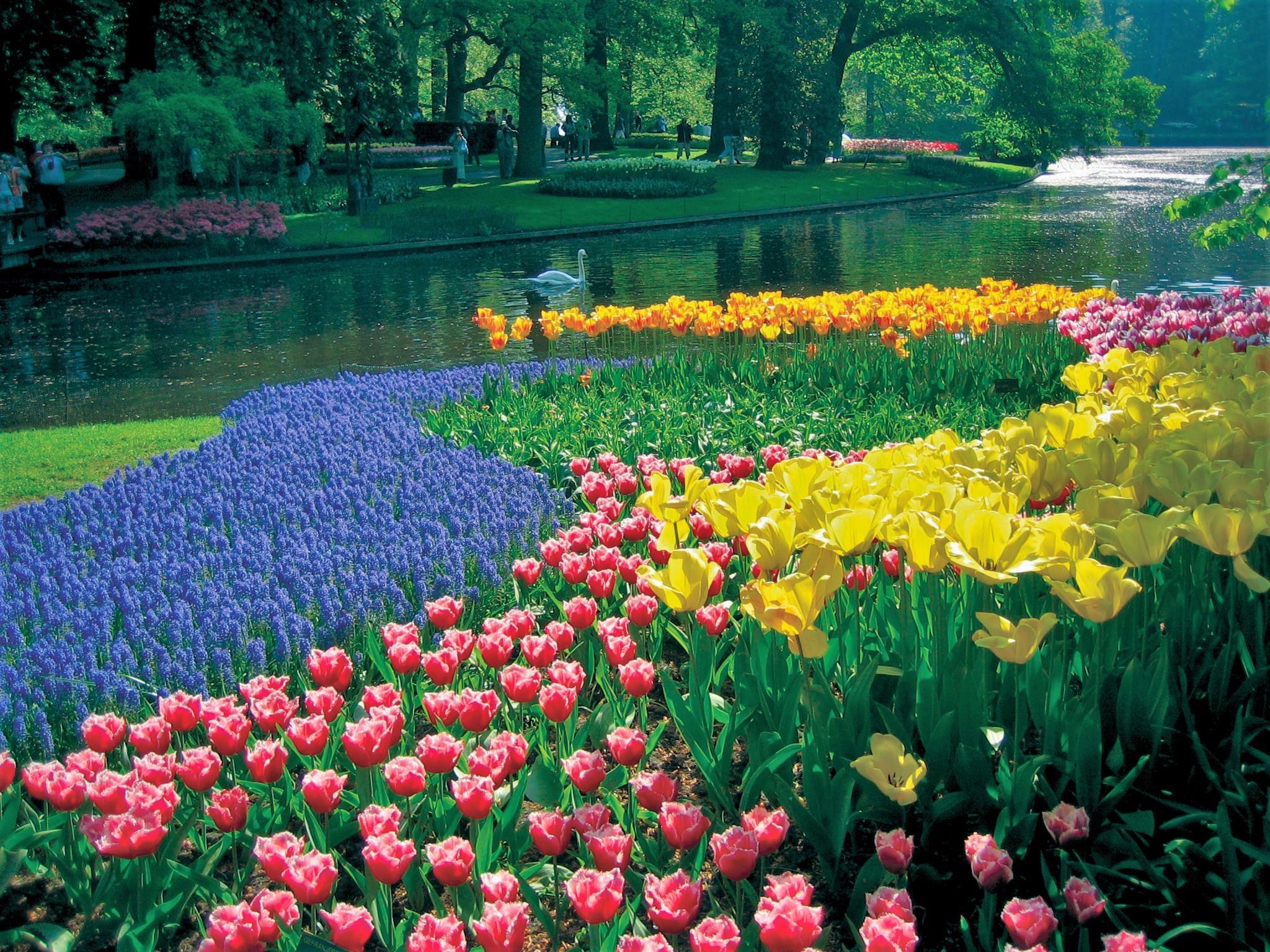 Keukenhof Gardens, April 28 157